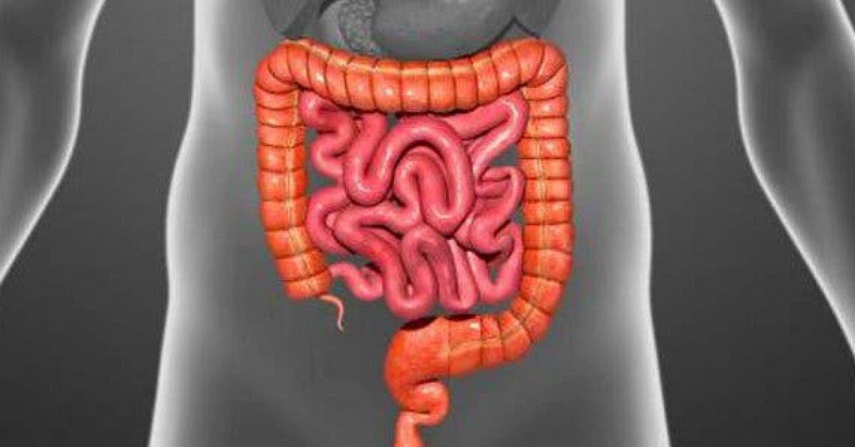 10 aliments pour nettoyer votre colon11