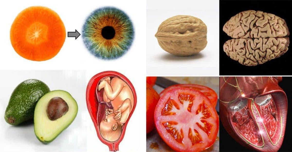 10 aliments qui ressemblent aux organes quils guerissent 1