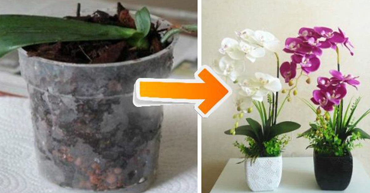 10-conseils-simples-et-pratiques-pour-faire-fleurir-des-orchidees-a-la-maison