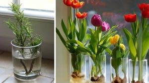 10-fleurs-et-plantes-que-vous-pouvez-facilement-cultiver-dans-un-verre-deau-pour-que-votre-maison-sente-toujours-bon