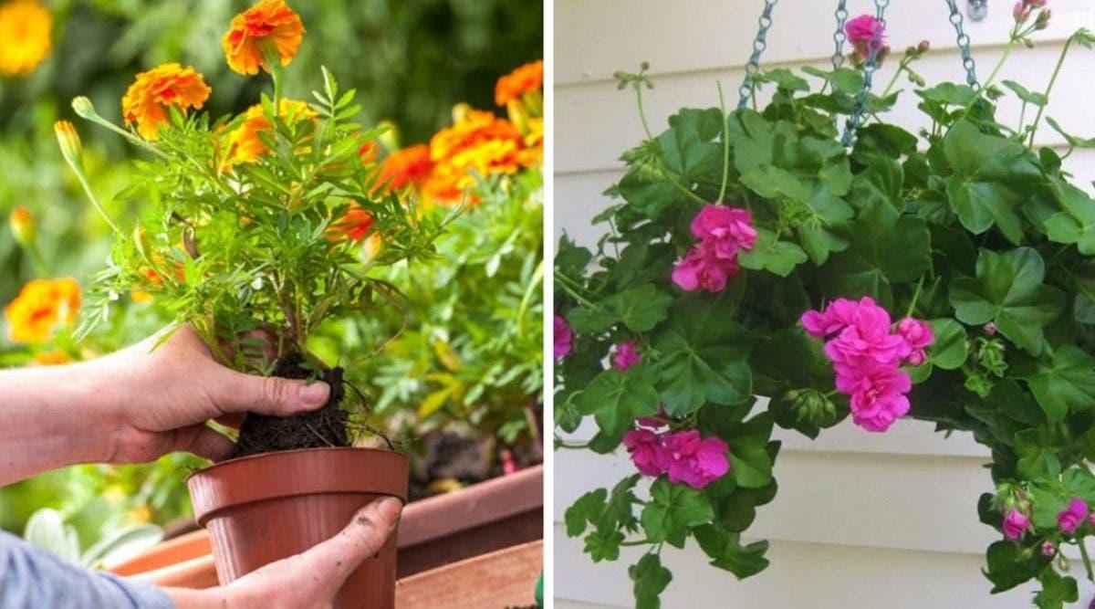 10-plantes-anti-moustiques-faciles-a-cultiver