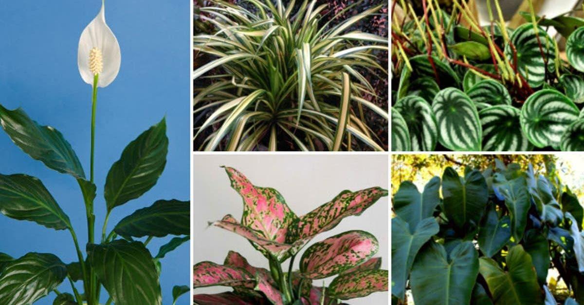 10-plantes-dinterieur-qui-nont-pas-besoin-de-soleil-pour-pousser