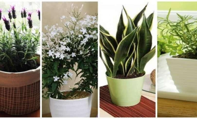 10 plantes que vous devriez avoir dans votre chambre pour for Chambre urinaire