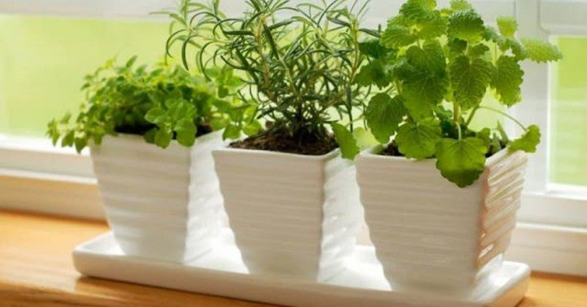 10 plantes qui attirent lenergie positive 1