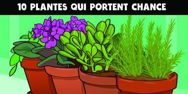 plantes qui portent chance et apportent une énergie positive dans la maison