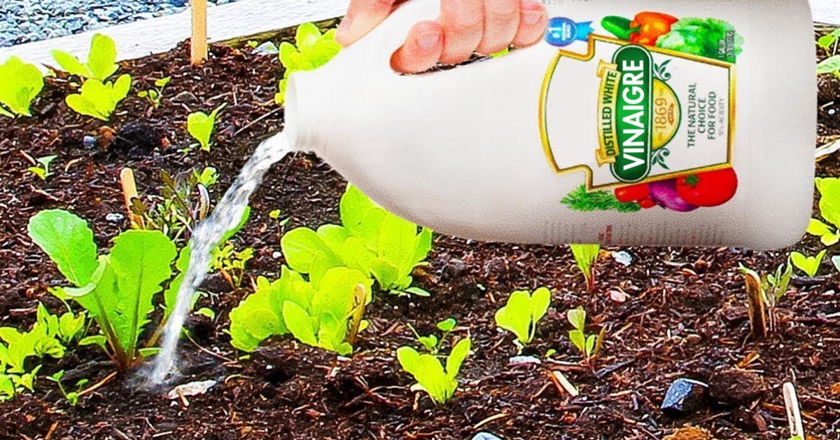10-raisons-dutiliser-le-vinaigre-dans-votre-jardin