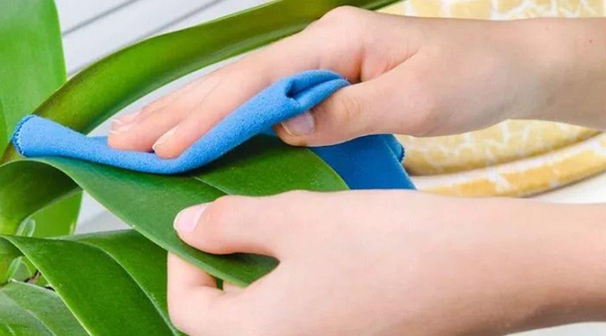 10-utilisations-du-bicarbonate-de-soude-pour-prendre-soin-de-votre-jardin