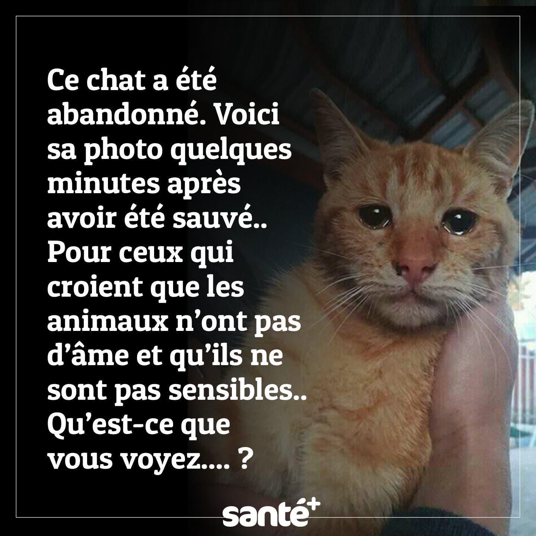 Non à l'abandon d'animaux