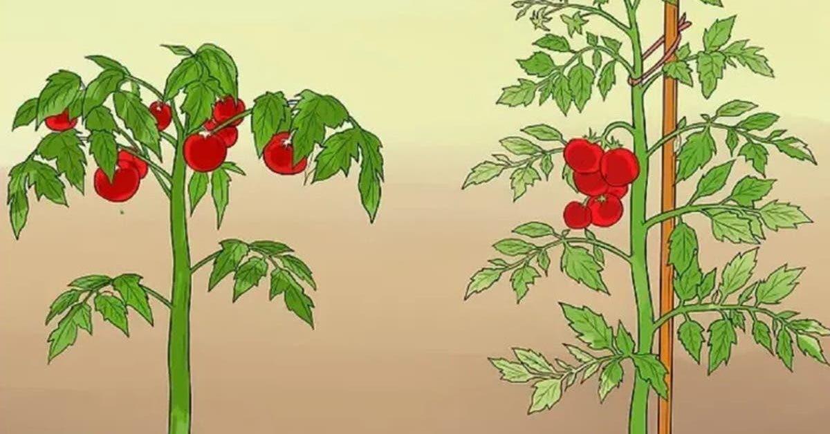 11-astuces-pour-que-vos-tomates-poussent-parfaitement