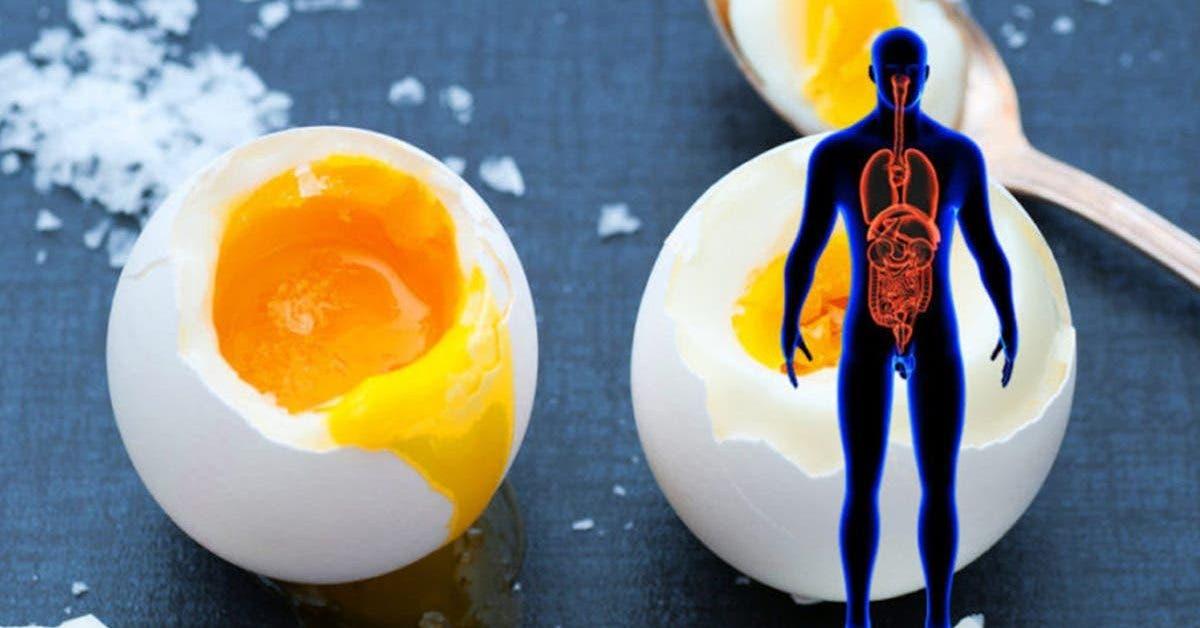11 choses qui arrivent a votre corps lorsque vous consommez deux oeufs par jour 1