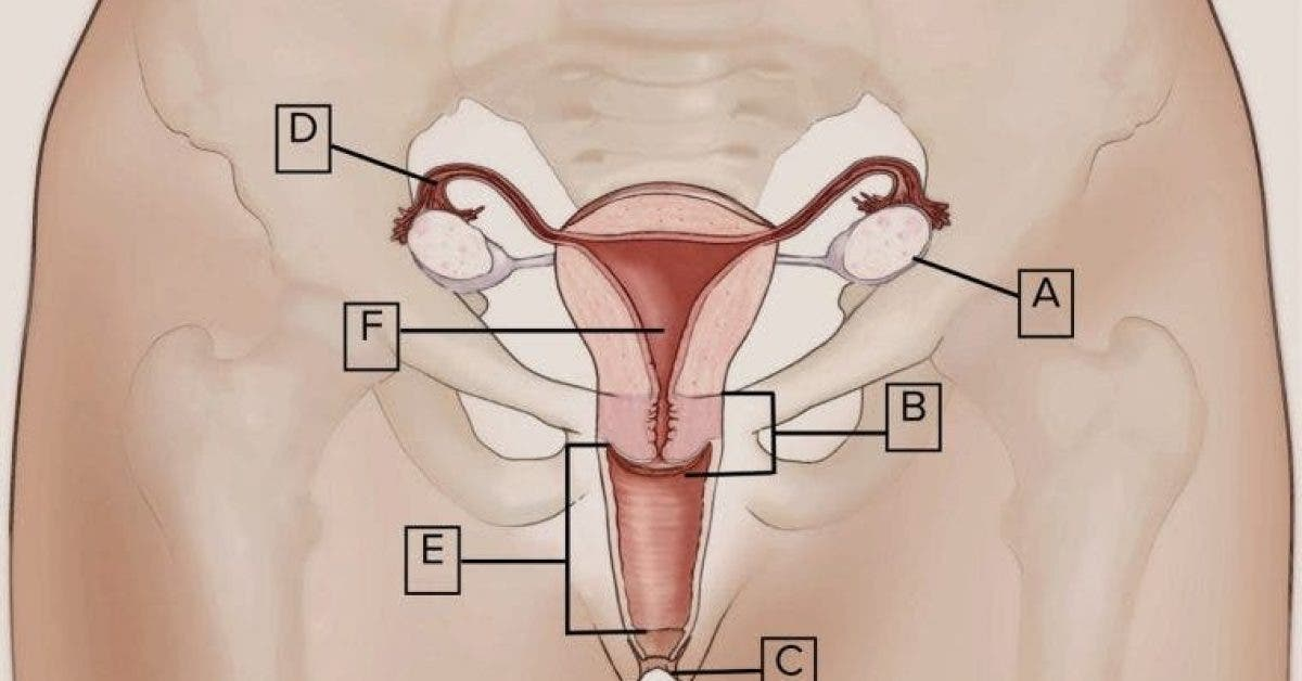 11 faits étonnants sur le clitoris