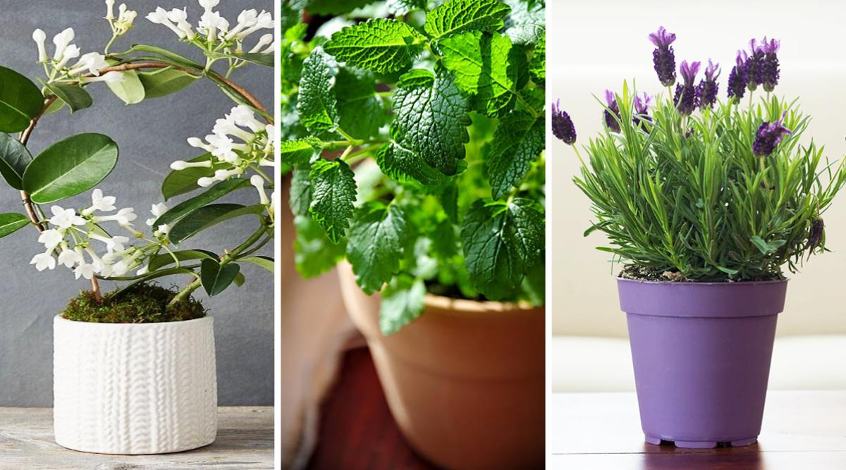 11-meilleures-plantes-dinterieur-odorantes-pour-parfumer-et-decorer-votre-maison