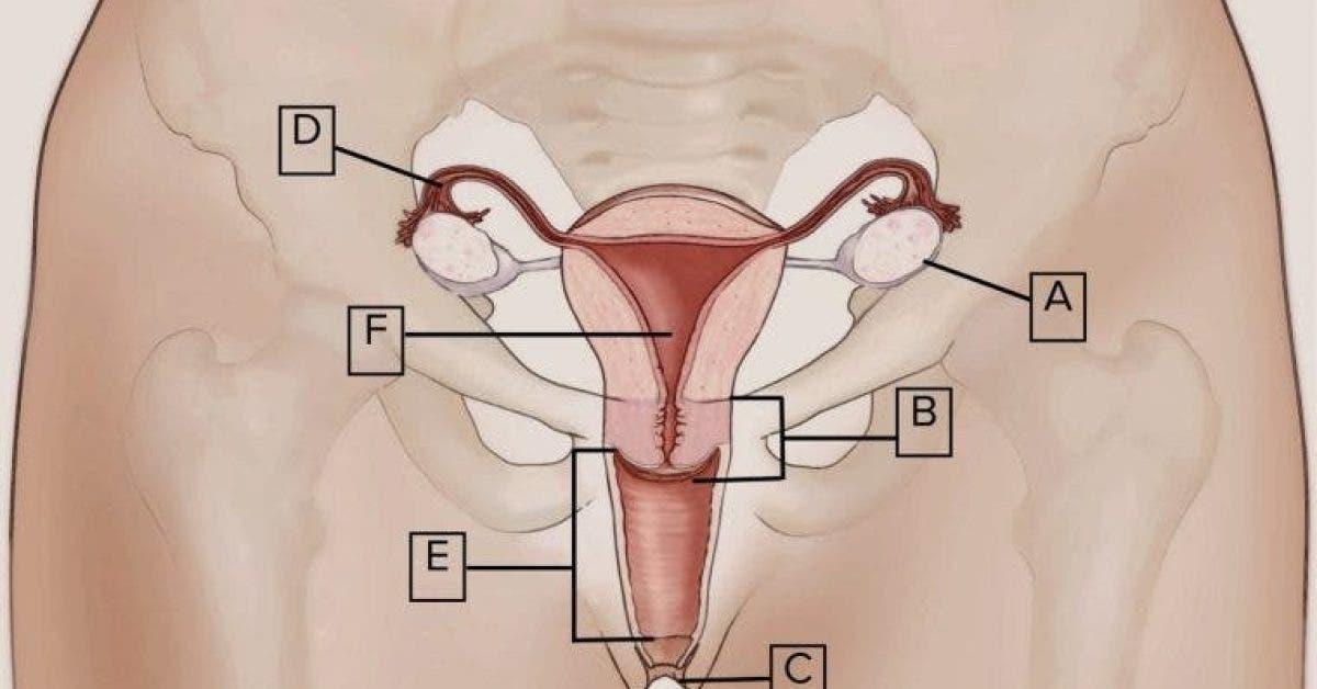 12 choses à savoir sur votre clitoris