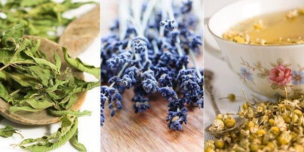 12-plantes-pour-vous-aider-a-combattre-la-depression-et-lanxiete