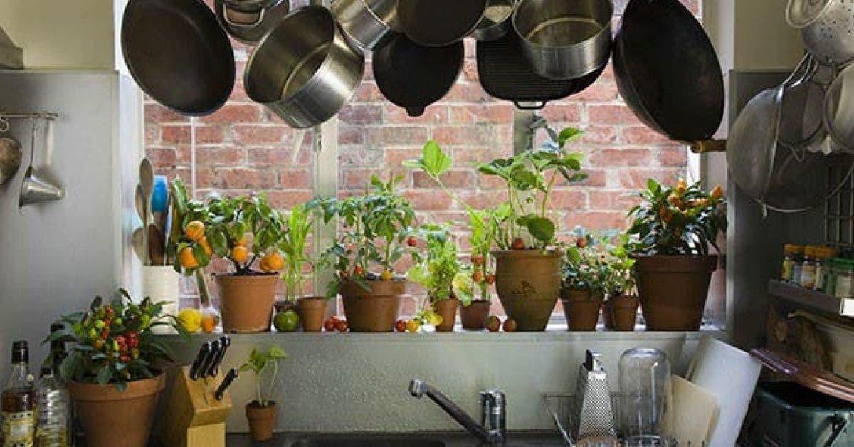 12 plantes qui depolluent votre maison 1
