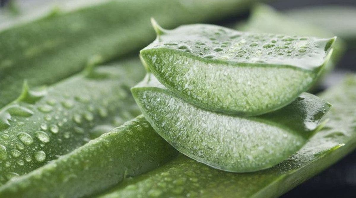 remèdes naturels puissants pour l'eczéma