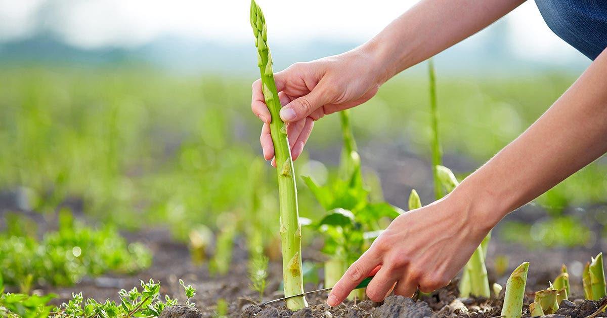 13-legumes-qui-poussent-plus-vite-lorsquon-les-coupe