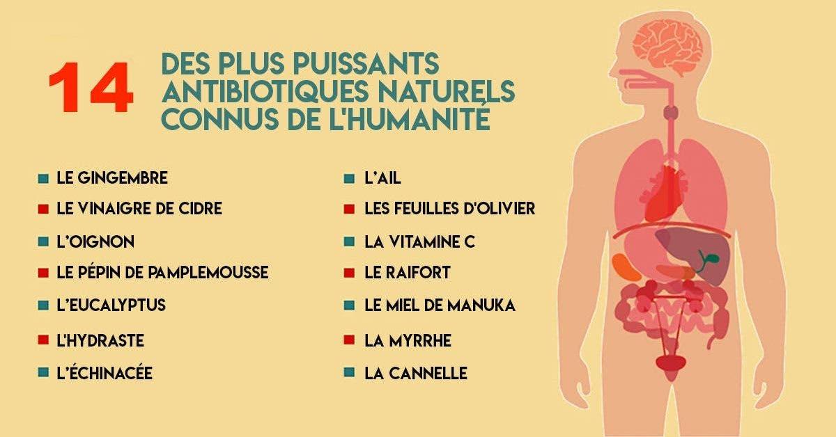plus puissants antibiotiques naturels connus de l'humanité