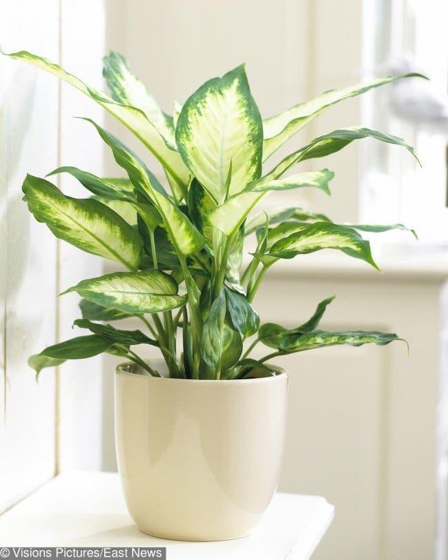 15 plantes déconseillées que vous avez probablement dans votre maison