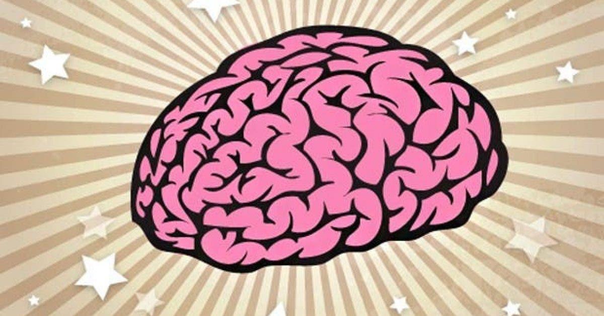 20 choses que vous ne savez probablement pas sur le cerveau humain 1