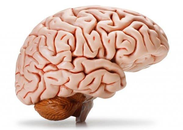 20-choses-que-vous-ne-savez-probablement-pas-sur-le-cerveau-humain1