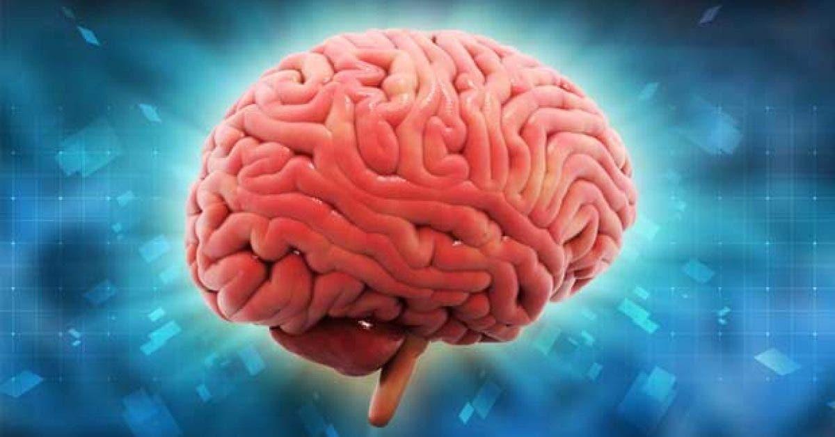 8 aliments qui abiment votre cerveau