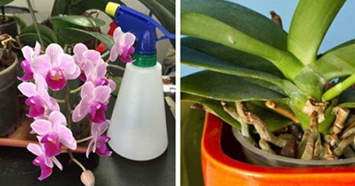 3-conseils-simples-et-efficaces-pour-faire-revivre-vos-orchidees