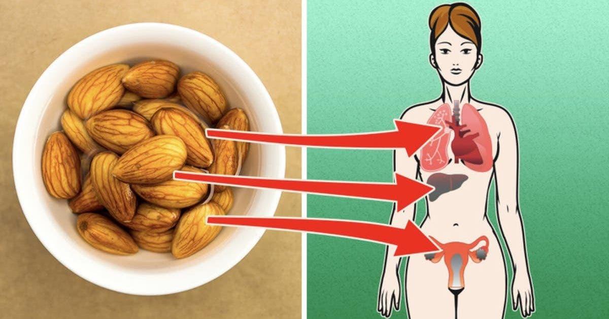 4-choses-qui-se-passent-dans-votre-corps-lorsque-vous-mangez-des-amandes-tous-les-jours