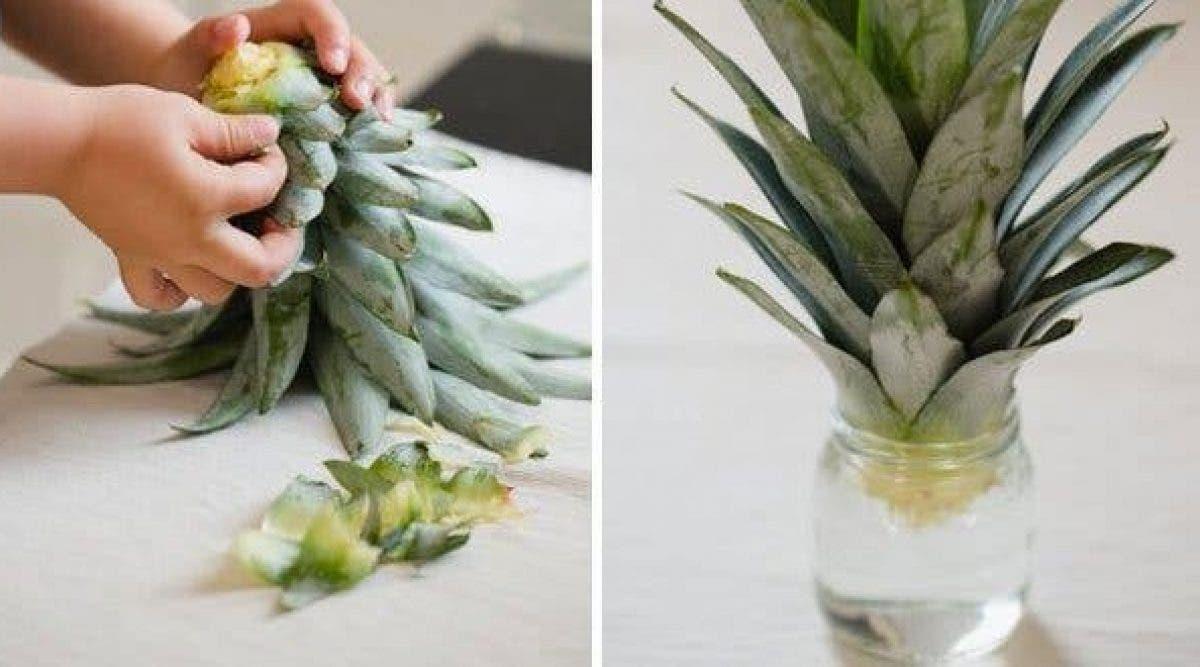 5-aliments-a-cultiver-a-partir-de-leurs-racines