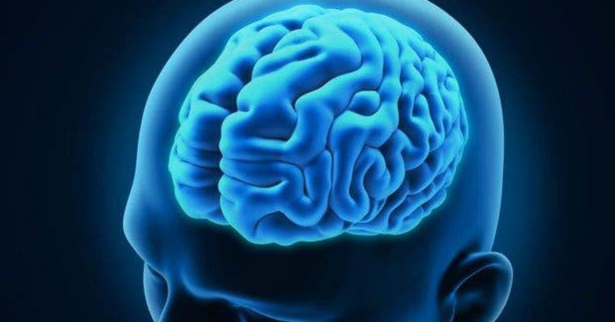 5 aliments qui boostent le cerveau2