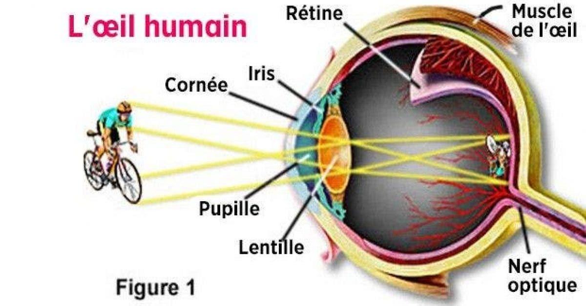 5 habitudes dangereuses pour les yeux et la vue mais que vous faites tous les jours 1