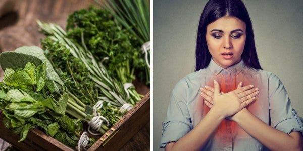 5-plantes-qui-purifient-et-nettoient-vos-poumons-et-voici-comment-les-utiliser