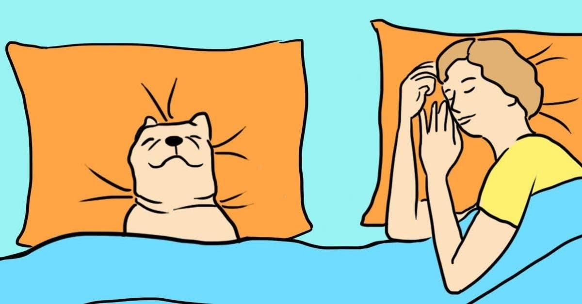 5 raisons surprenantes pour lesquelles votre chien doit dormir dans votre lit chaque nuit