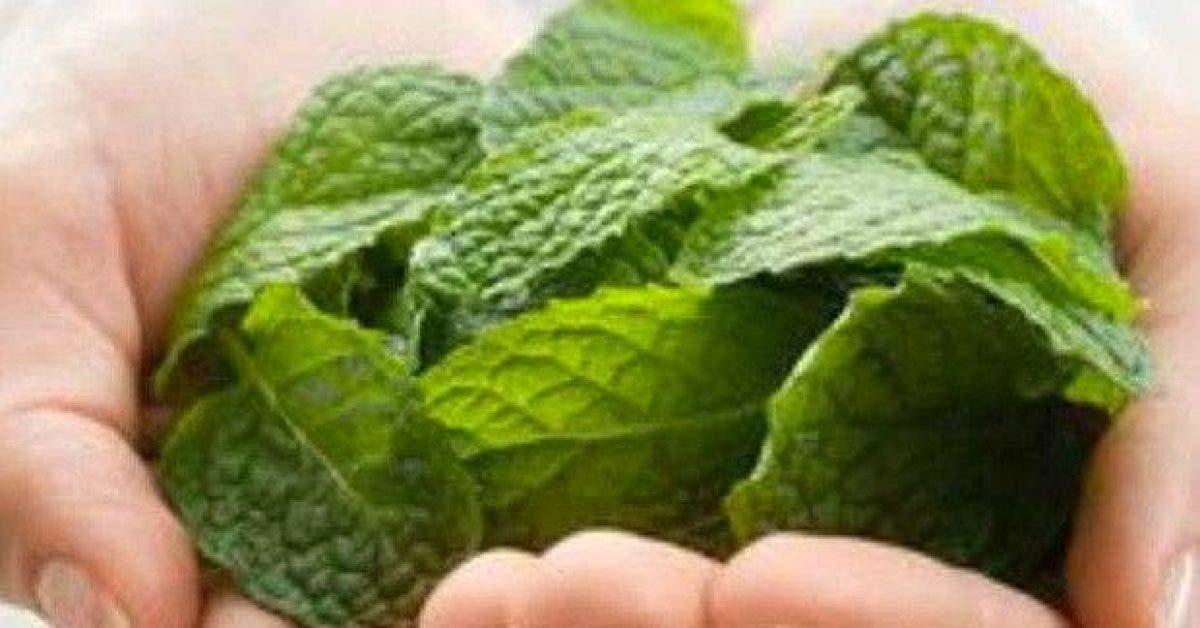 6 alternatives aux feuilles de menthe 1