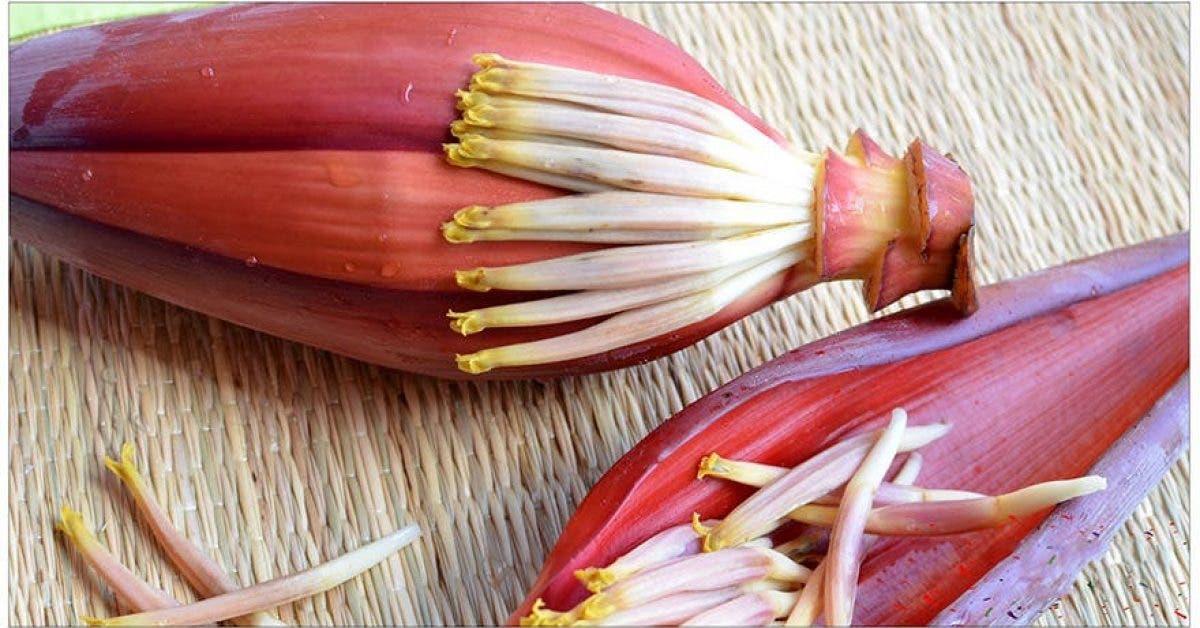 6 choses qui arrivent lorsque vous mangez des fleurs de banane 1