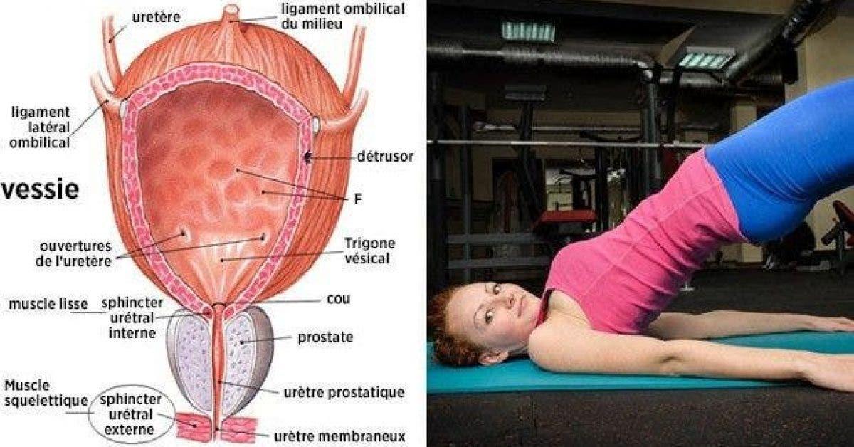 6 exercices qui aident a controler la vessie 1