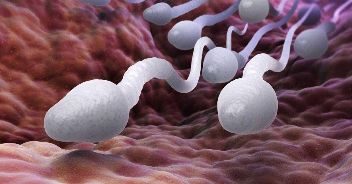 6 façons de rendre votre sperme plus fort, plus rapide et plus fertile