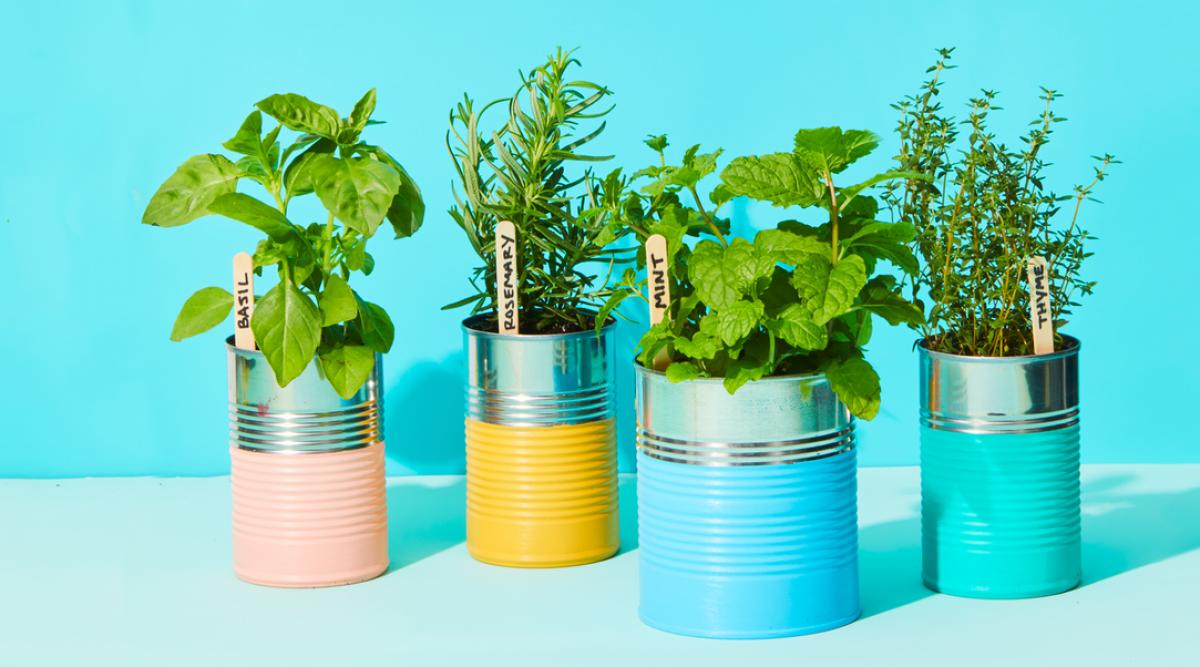 6 herbes aromatiques et médicinales à planter une fois et dont vous profiterez plusieurs années