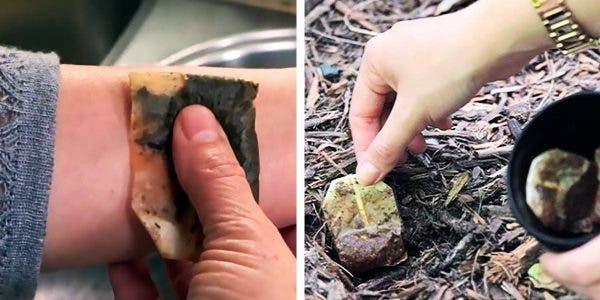 manières de réutiliser les sachets de thé usagés