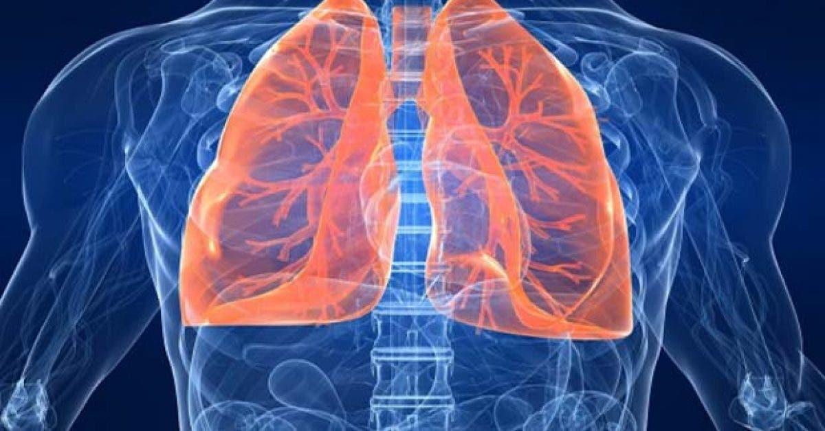 6 types de regeneration des tissus corporels par la nutrition11