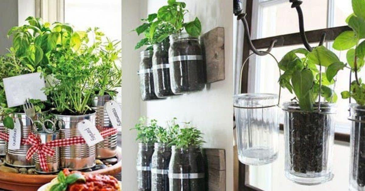 7 herbes aromatiques et medicinales faciles a faire pousser chez soi et comment les cultiver 1