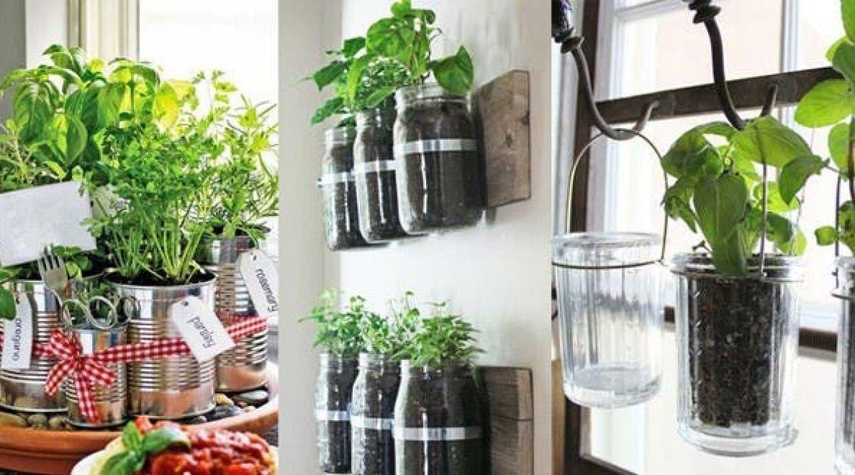Comment Bien Faire Pousser Du Basilic 7 herbes médicinales à faire pousser chez vous
