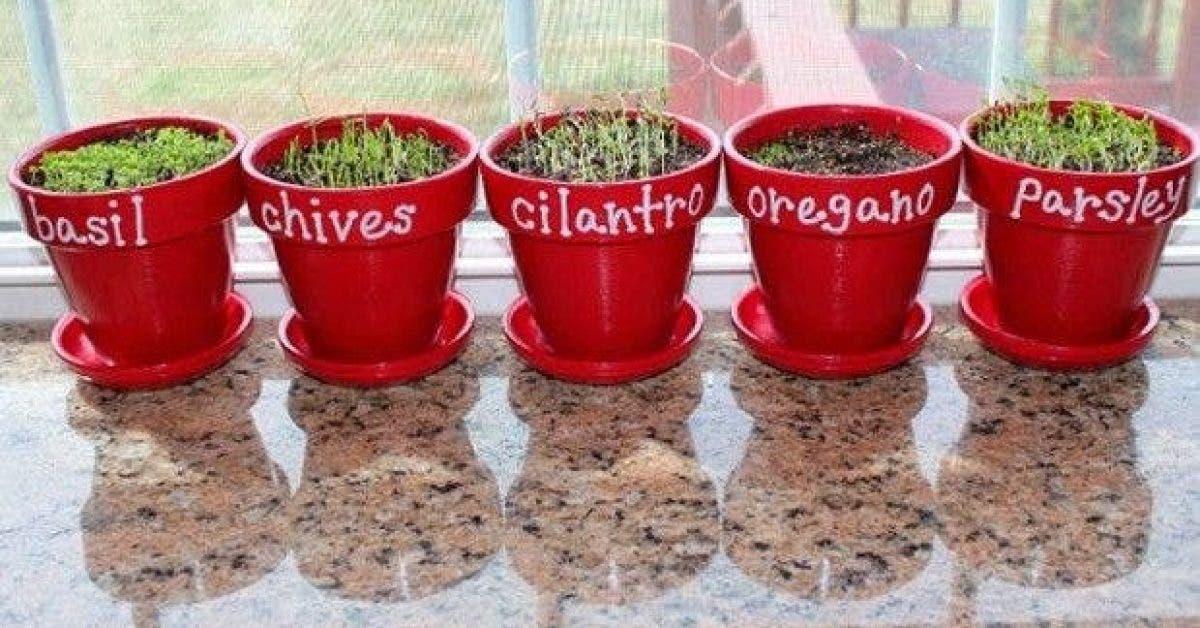 7 plantes a cultiver chez soi et des conseils pour bien les faire pousser 1