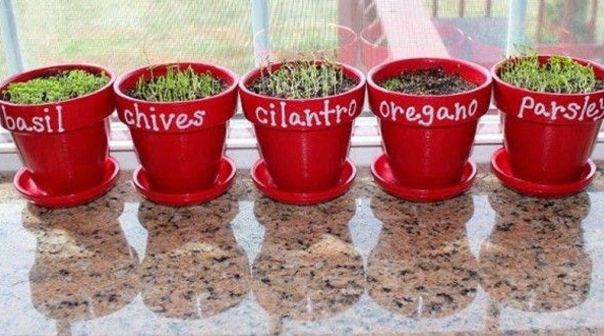 Comment Bien Faire Pousser Du Basilic 7 plantes à cultiver chez soi et des conseils pour bien les