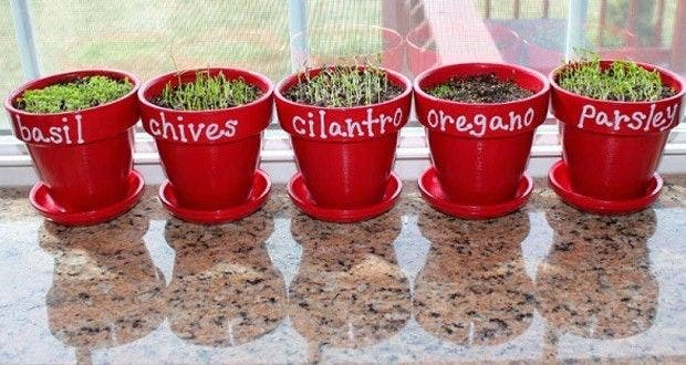 7 plantes cultiver chez soi et des conseils pour bien les faire pousser. Black Bedroom Furniture Sets. Home Design Ideas