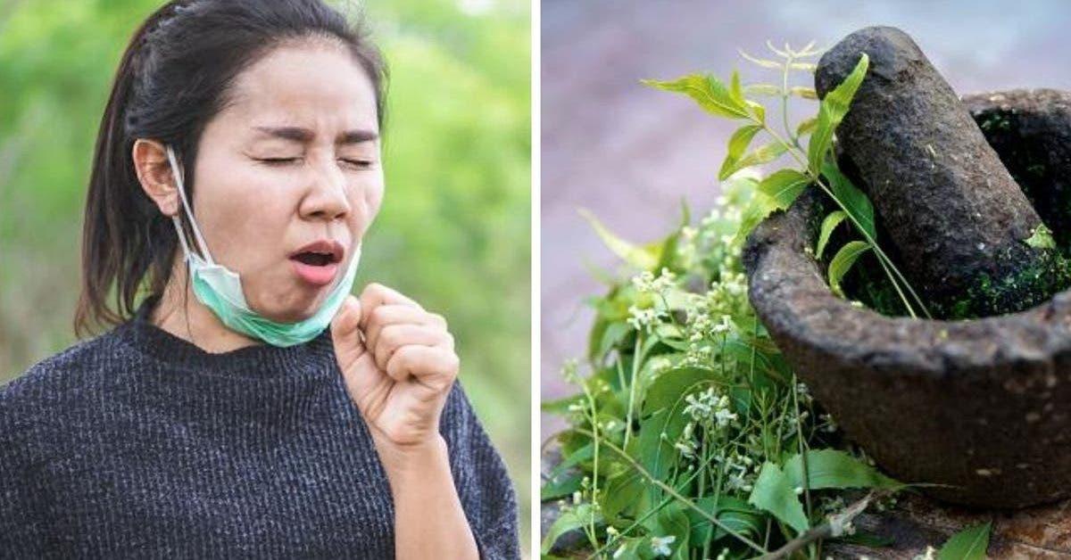 7-plantes-medicinales-pour-venir-a-bout-de-la-toux-naturellement