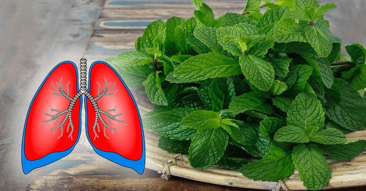 7 plantes pour nettoyer vos poumons et lutter contre lasthme 1