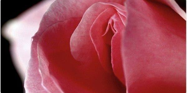 choses fascinantes que vous ne saviez pas sur le clitoris