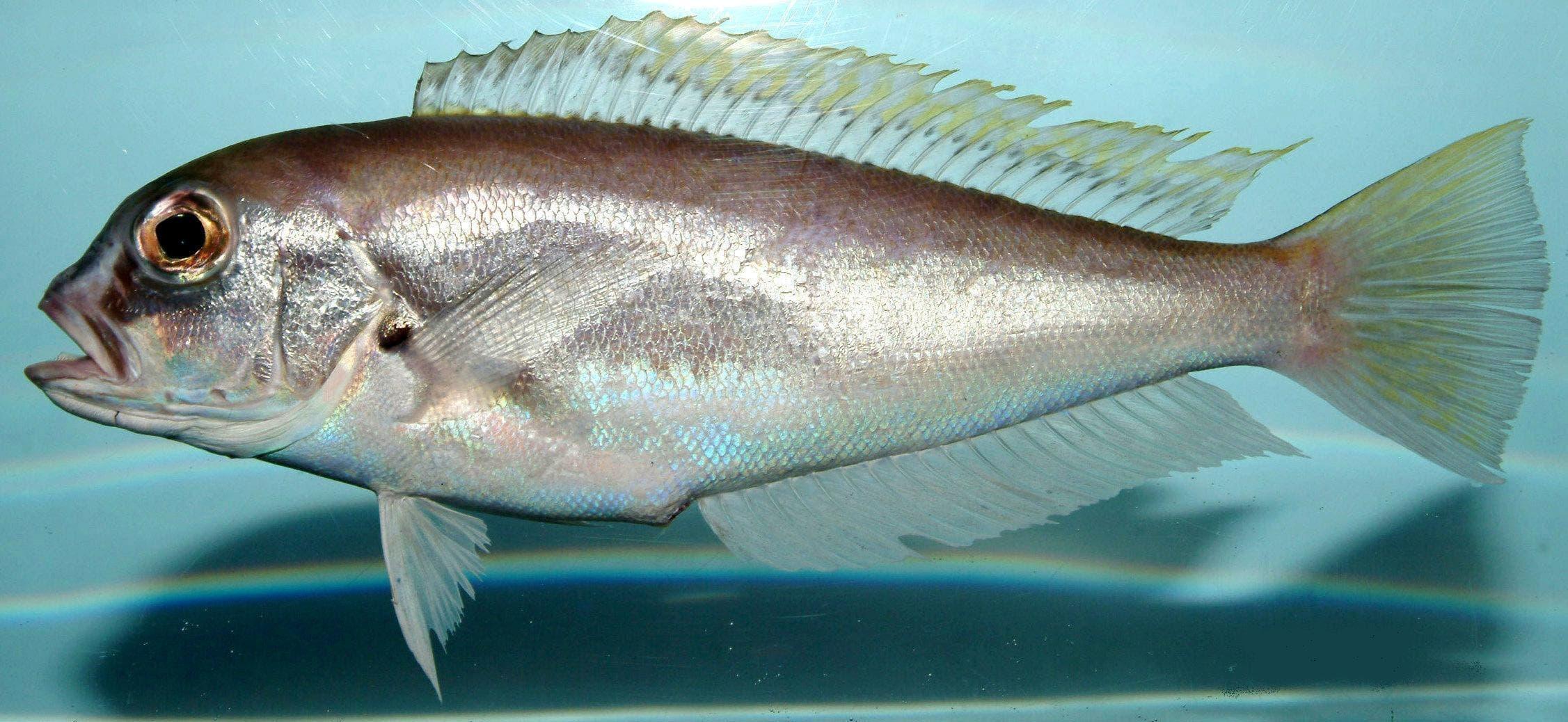 espèces de poissons que vous devez ne plus acheter pour préserver votre santé