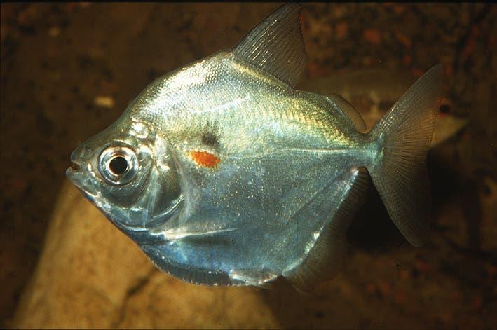 8 esp ces de poissons que vous devez ne plus acheter pour for Poisson a acheter